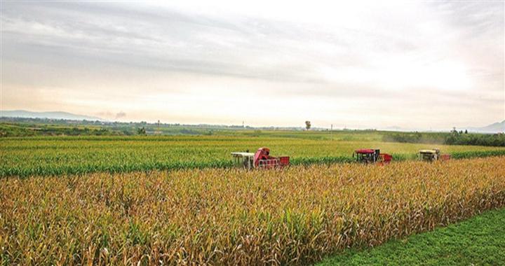襄汾玉米喜获丰收