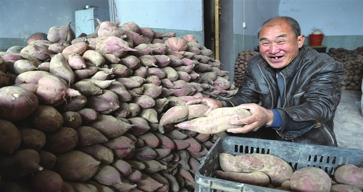 大宁石城村:红薯喜丰收 农民乐开颜