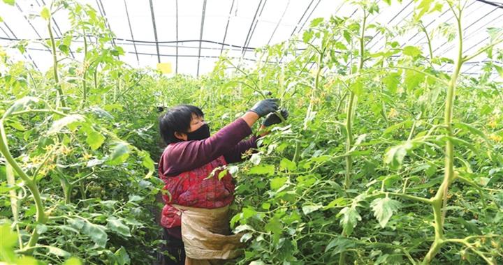 曲沃:为蔬菜市场供应提供有力保障