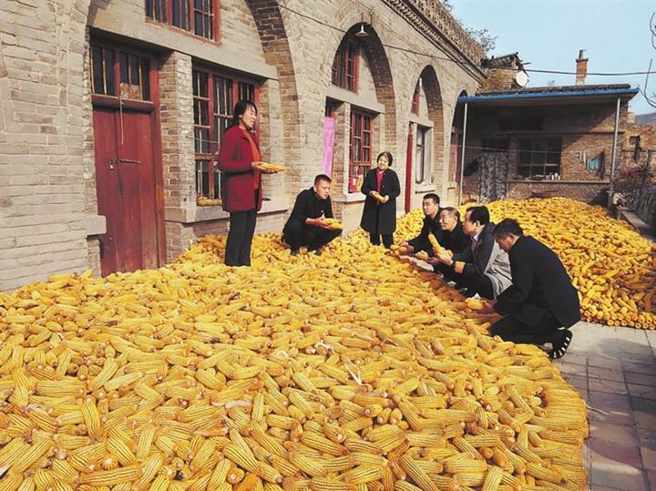 汾西瓦伦坪村:玉米丰收晾晒忙