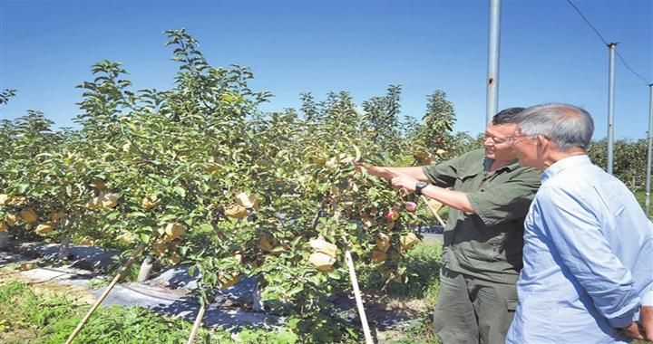 蒲县:全力打造生态果园