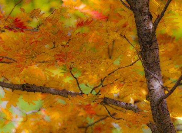 七里峪的秋天(9张)